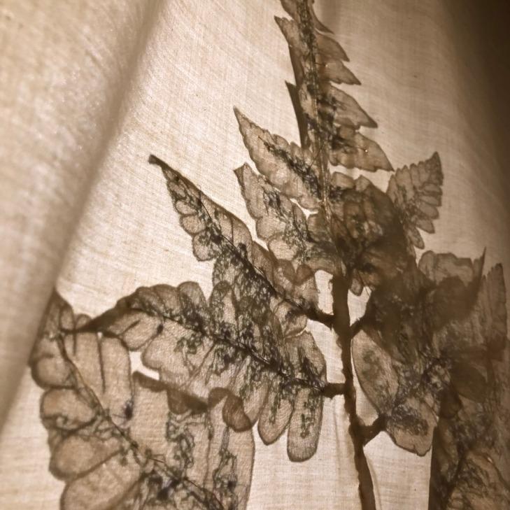 蕨類疊影(4)
