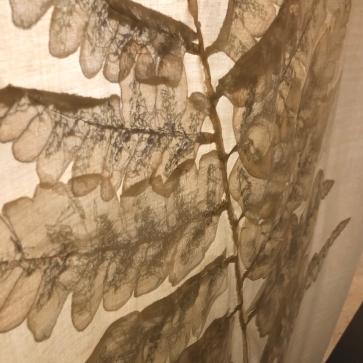 蕨類疊影(5)