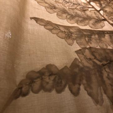 蕨類疊影(6)